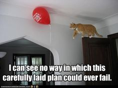 Cat meme with the caption, I can see no way in which this carefully laid plan could ever fail