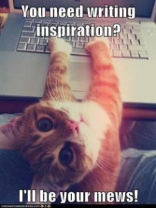 Meme of cat at keyboard, with the caption Inspiration? I'll be your mews.