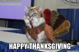 Cat in a turkey costume, wih the caption, Happy Thanksgiving!