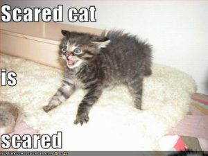 Scared cat is scared