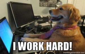 Dog at computer with the caption, I work hard