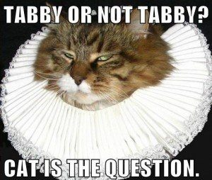 LOLcat with the caption, Tabby or not tabby? Cat is the question.