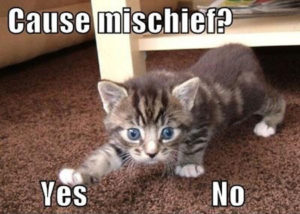 Meme with the question, Cause mischief? Showing kitten reaching toward the answer Yes, rather than no