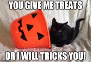 Black cat with Halloween bucket